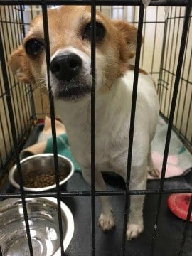 (photos courtesy Second Chance Animal Shelter)