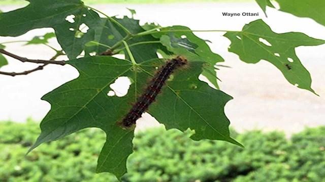 Image Courtesy: Ottani Tree Services