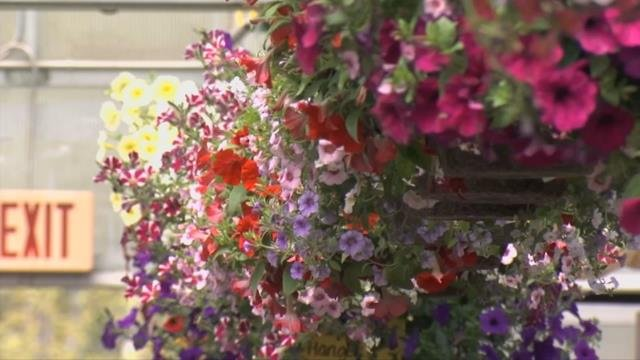 Businesses reap benefits of last-minute Mother's Day shoppers
