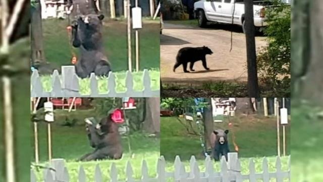 Southwick urging residents to not feed the bears
