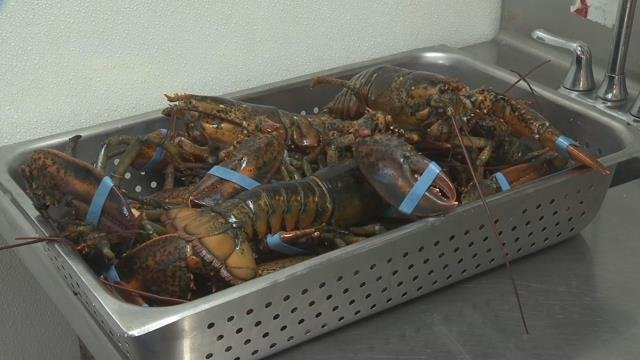 Lobster supply abundant, at least for now