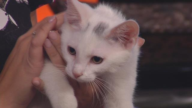 Meet Ralphy and Keyla, two great kittens looking for a forever home
