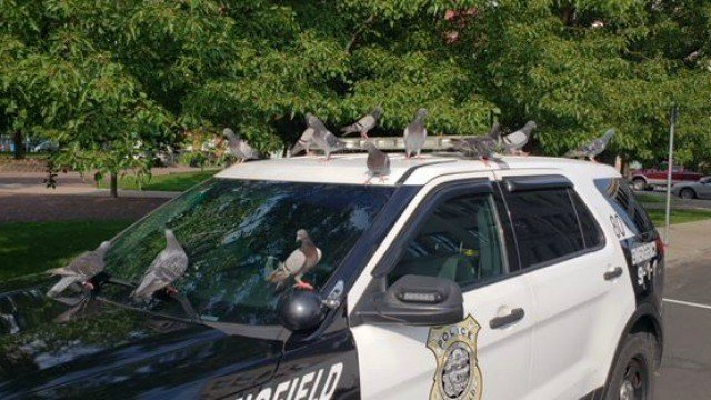 Image: Springfield Police Department