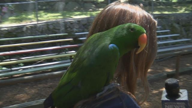 Bird shows and presentations at Southwick's Zoo