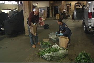 Marijuana plants discovered by Springfield Police