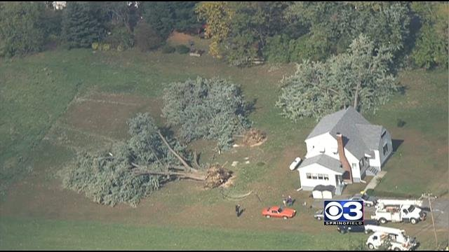 Trees were uprooted after severe weather hit Easthampton.